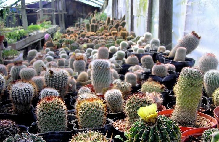 Vivero cactus mi ilusion for Viveros en uruguay