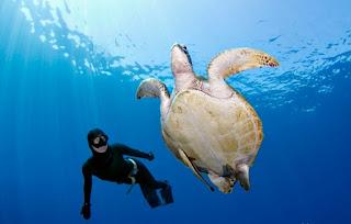 scuba diving in Maratua, diving, jelly fish in maratua