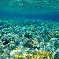 Underwater image of the ocean
