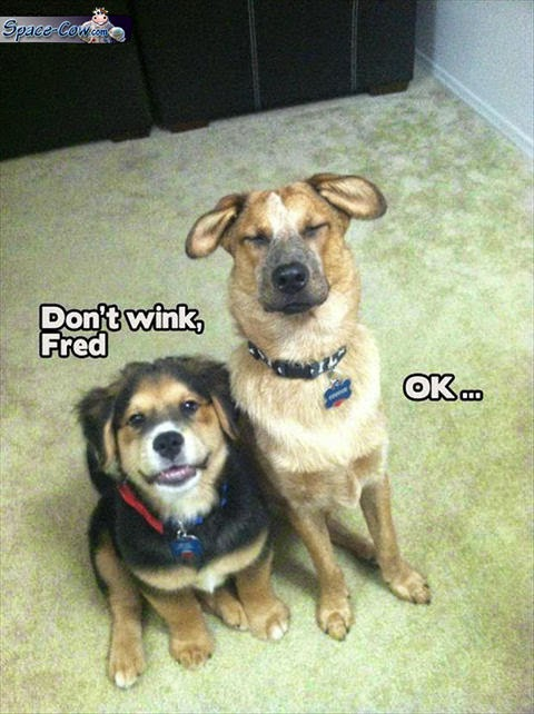 funny dogs picture humor