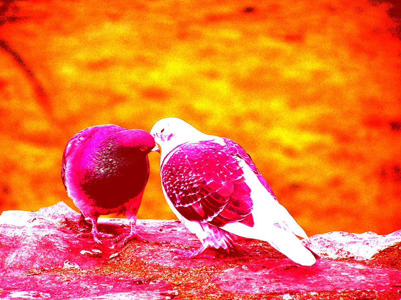 wallpapers of love birds. Love Birds wallpapers,