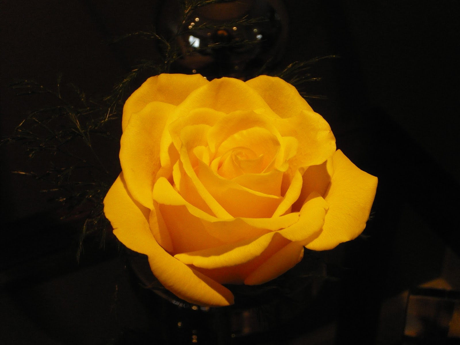 Dreams and epiphanies yellow rose in the hybridization process looks is given precedence over scent but this one actually smelled wonderful in the language of flowers the yellow rose mightylinksfo