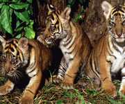 Tropical Rainforest Heritage of Sumatra Indonesia