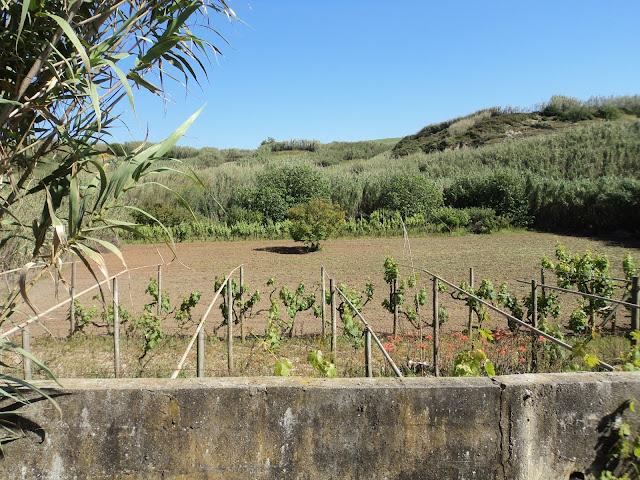 Farms in Portugal