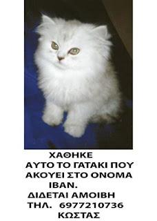 Χάθηκε το γατάκι της φωτογραφίας που ακούει στο όνομα Ιβάν