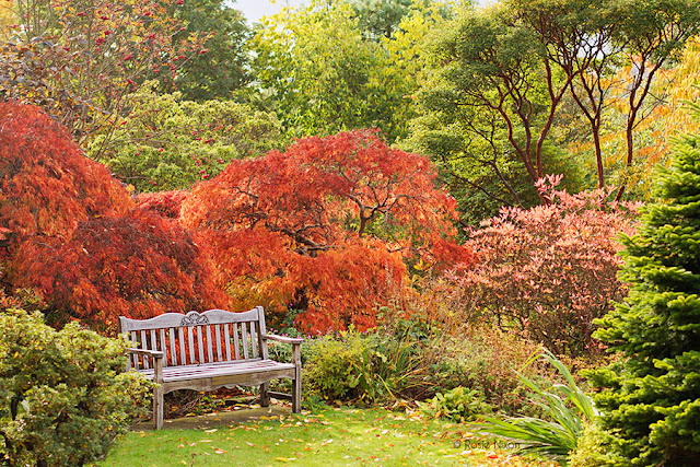 a bench with an autumnal view
