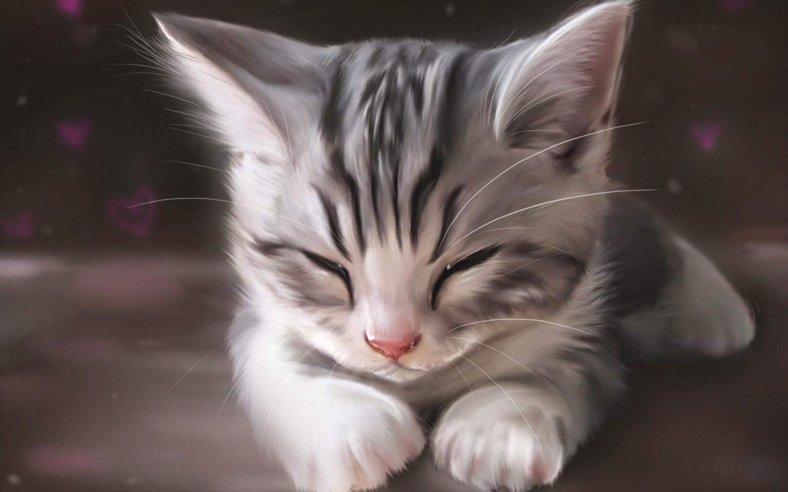 Cute Beautiful Cat Wallpapers Free Download PC