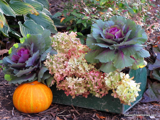 Hydrangea, kale and pumpkins in a rustic toolbox for your fall decor