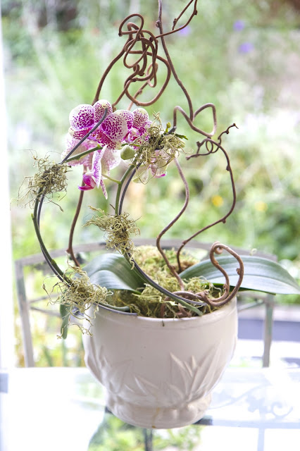 Orchid with a Twist; How to Landscape an Orchid; Nora's Nest