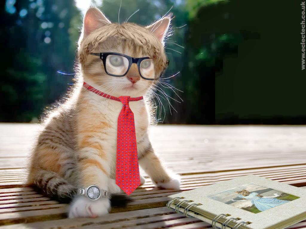 Kumpulan_gambar_kucing_gambar_hewan_lucu_ngakak_Gokil_Terbaru+(4).jpg