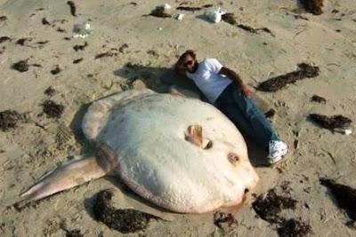 Peces Raros, Peces Gigantes, Pesca en Bote, fotos, imágenes, Giant Fish