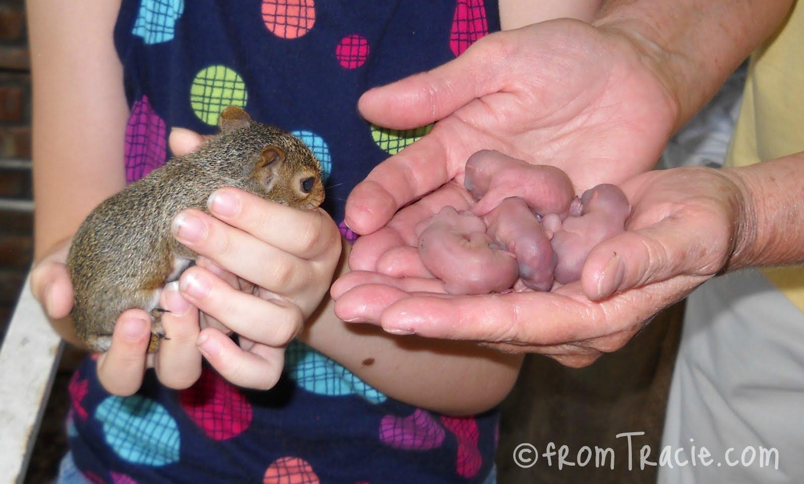 Amazoncom squirrel massager