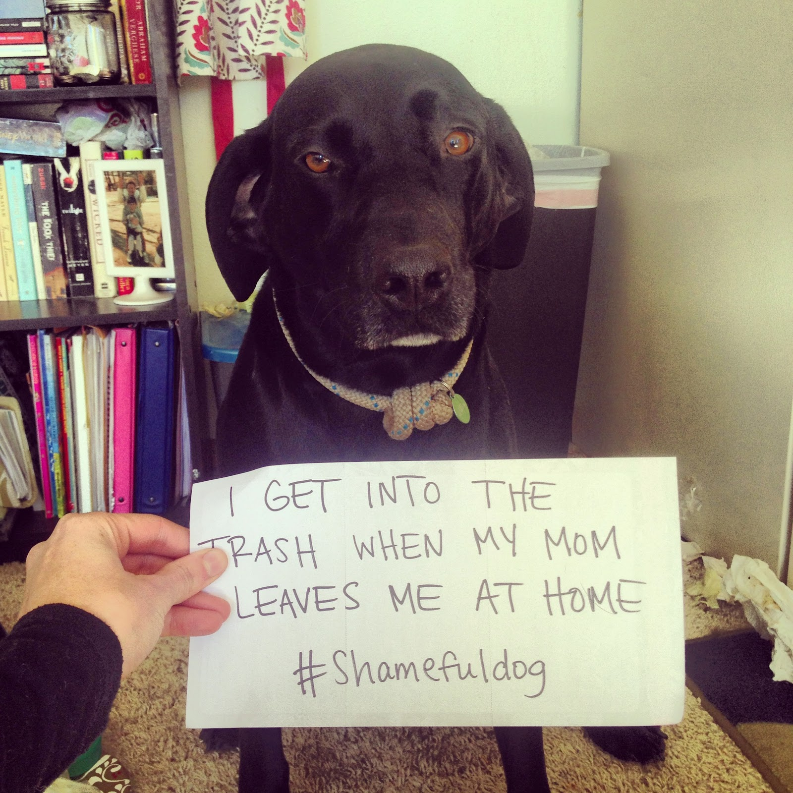 My Dog Wont Stop Licking Carpet: Mountains & Mode: What To Do When You're Dog Gets Into The