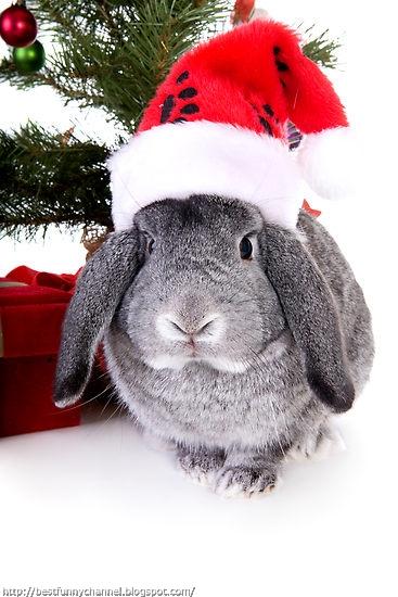 Cute Christmas bunny.