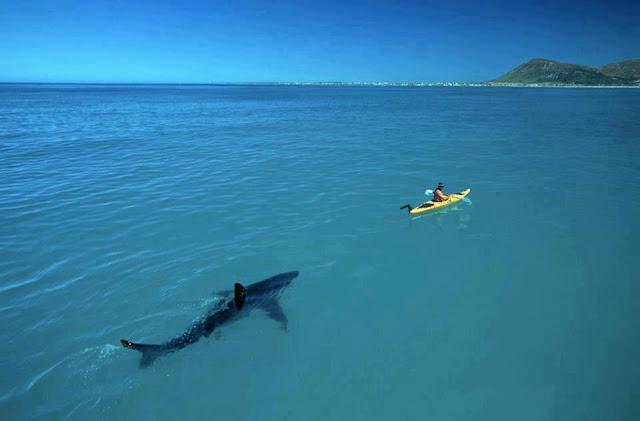 summer shark-asteia-καλοκαίρι-καλοκαιράκι- καρχαρίας-αστείες φωτογραφίες
