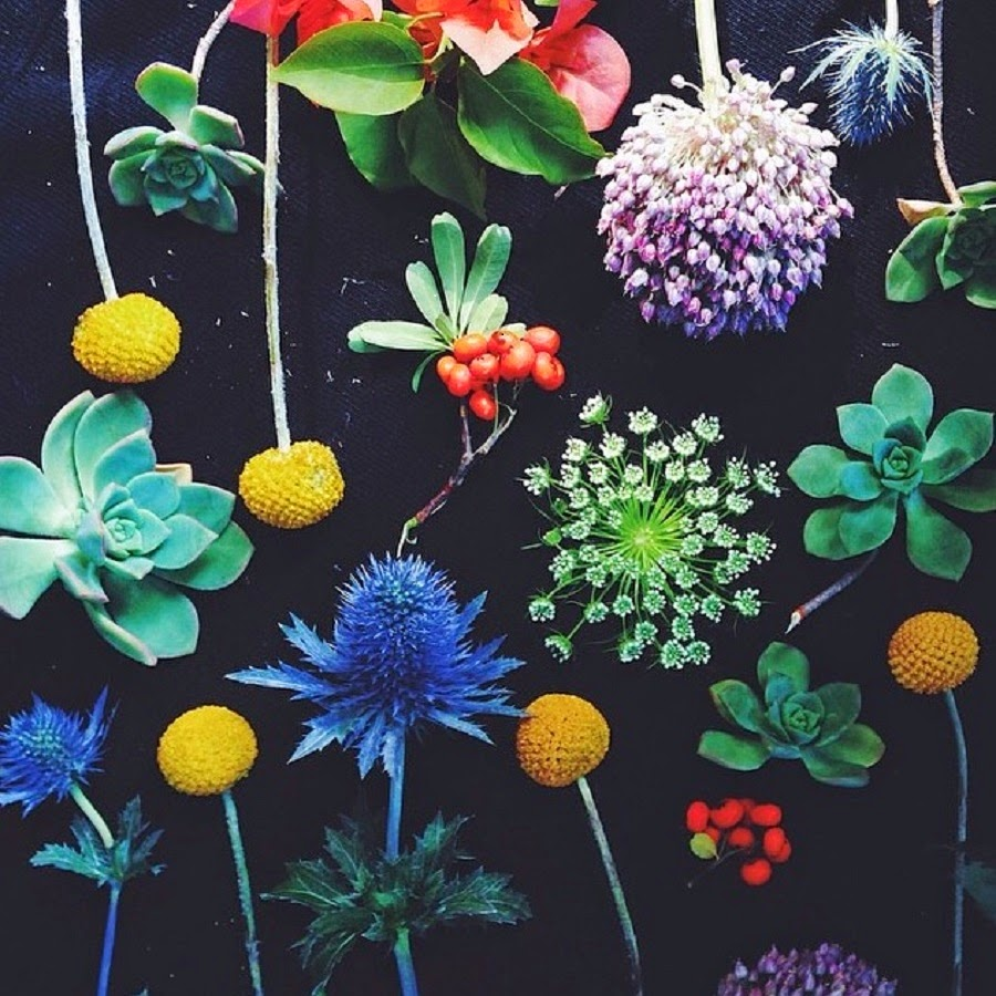 Botanical-Collage-Instagram