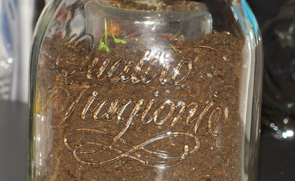 Mamma claudia e le avventure del topastro formiche in vaso - Formiche in casa perche ...