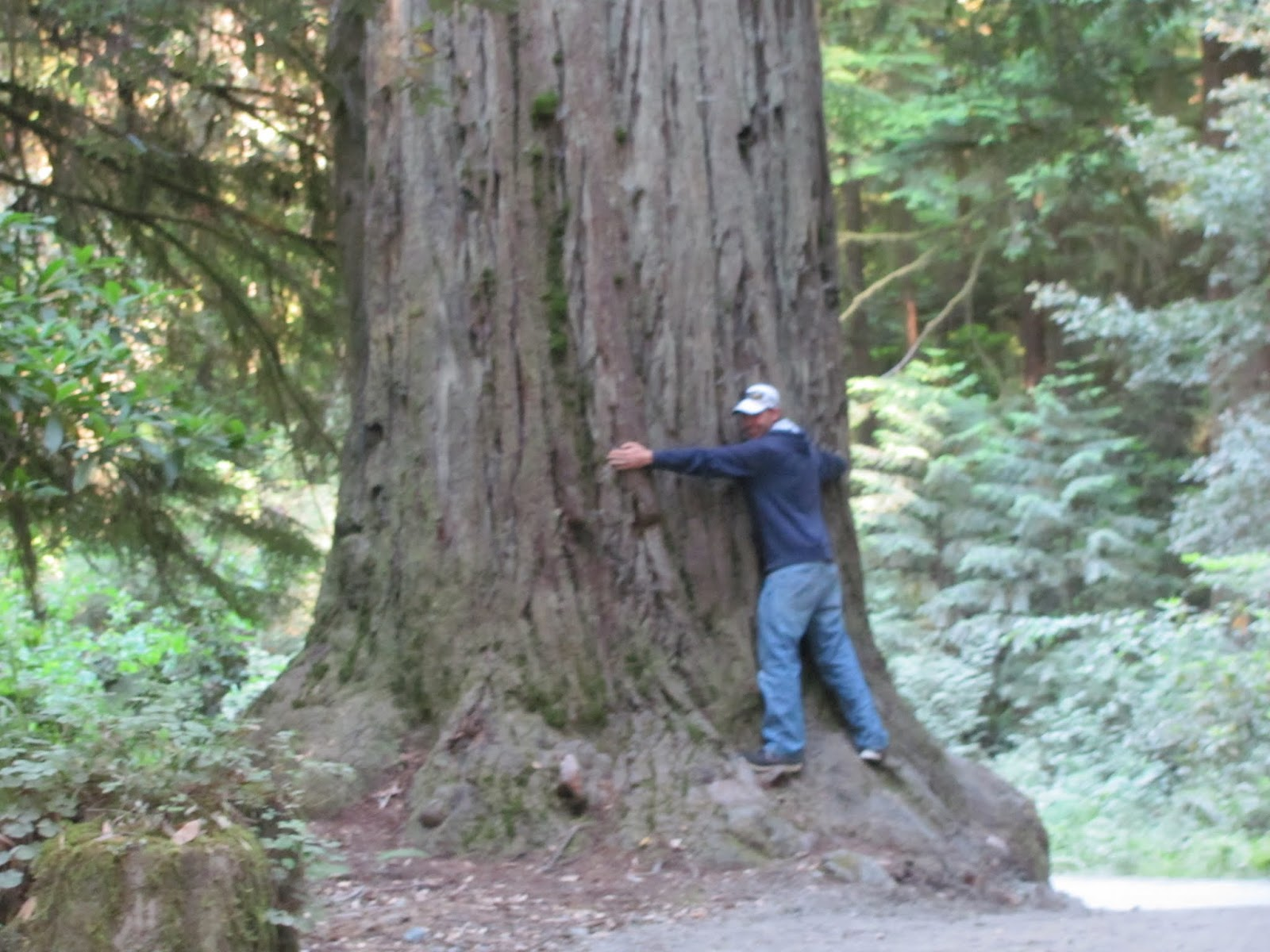 Cory hugs a giant redwood tree at Jedediah Smith State Park, California