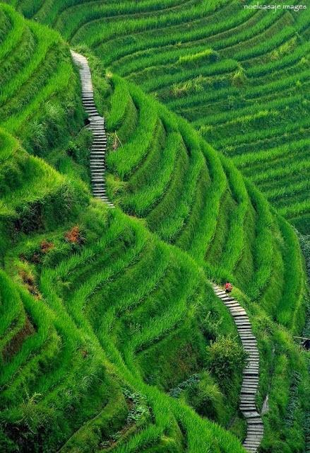 Longsheng rice terrace china for 100 rice terrace drive columbia sc