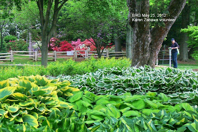 Hostas in foreground, rhododendrons in background border standing plaque in BRG, Port Credit, Ontario.
