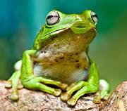 AQUÍ OS PRESENTAMOS FOTOS DE ANIMALES CURIOSOS (animales graciosos rana besucona)