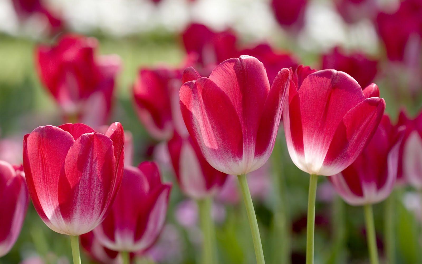 http://4.bp.blogspot.com/-JWwF76_bg7o/Tf-YCA3K_PI/AAAAAAAADro/B9gxyKLtmWQ/s1600/spring-flowers-wallpaper-2.jpg