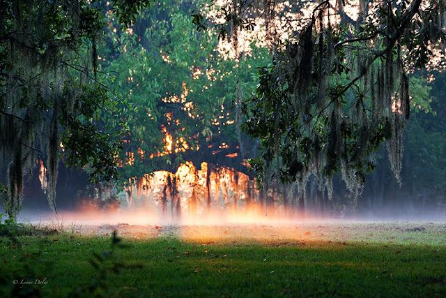 savannah sunrise casting