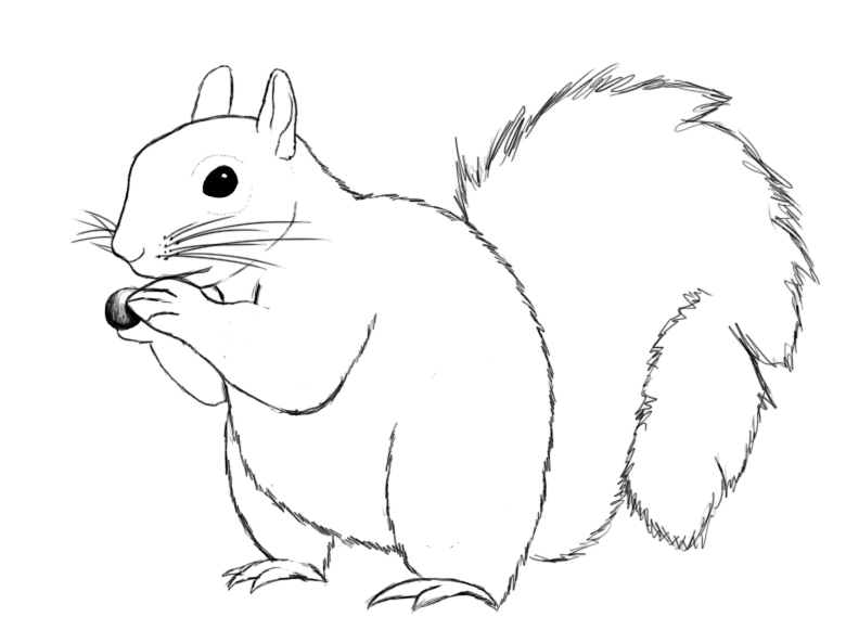 Squirrel Black And White Drawing Give Your Squirrel a Large
