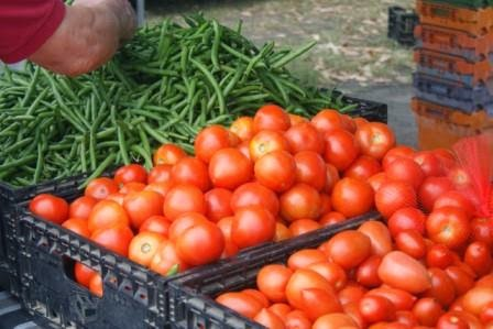 fresh beans and ripe tomatoes