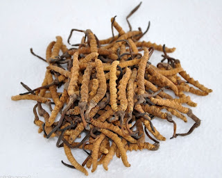 The cordyceps sinensis can reduce blood sugar levels.
