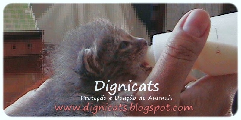 ღ♥ Dignicats ♥ღ  Proteção e Doação de Animais