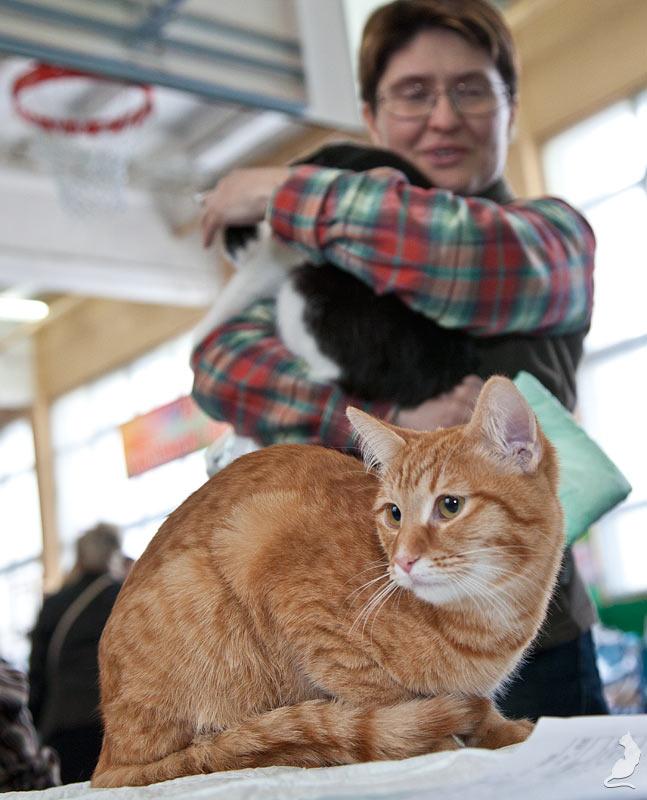 Выставка кошек в Реутове, шоу домусов, домусы, Сипатий