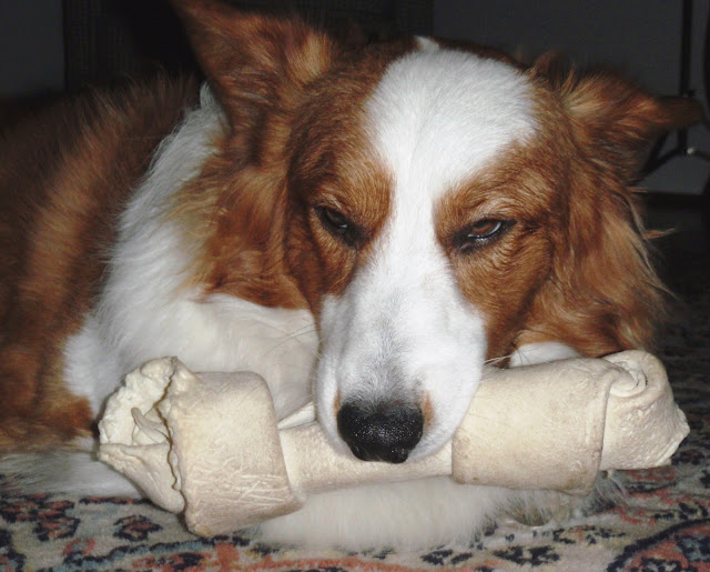 Image Result For Can Rawhide Cause
