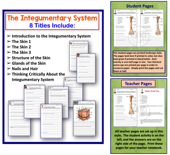 The skeletal system critical thinking and review questions