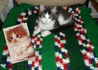 Anakin Two Legged Cat crochet blanket and kitty card