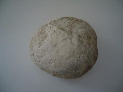 Fossil Tortoise/Turtle egg