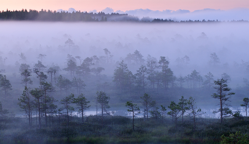 udune hommik Eestimaa rabas, misty morning in the bog of Estonia