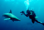 Mergulho com Tubares no Shark Feeding