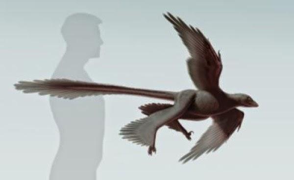 Changyuraptor Empat Sayap