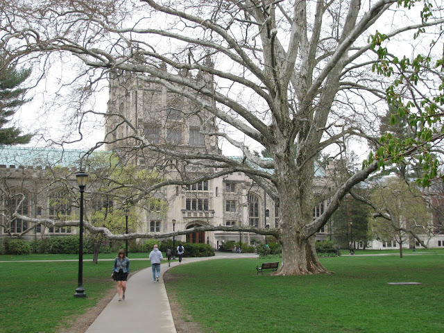 Vassar-College-tree