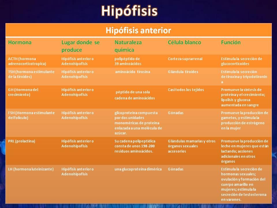 tablas de hormonas de la hipófisis y del hipotalamo | FISIOLOGIA BASICA