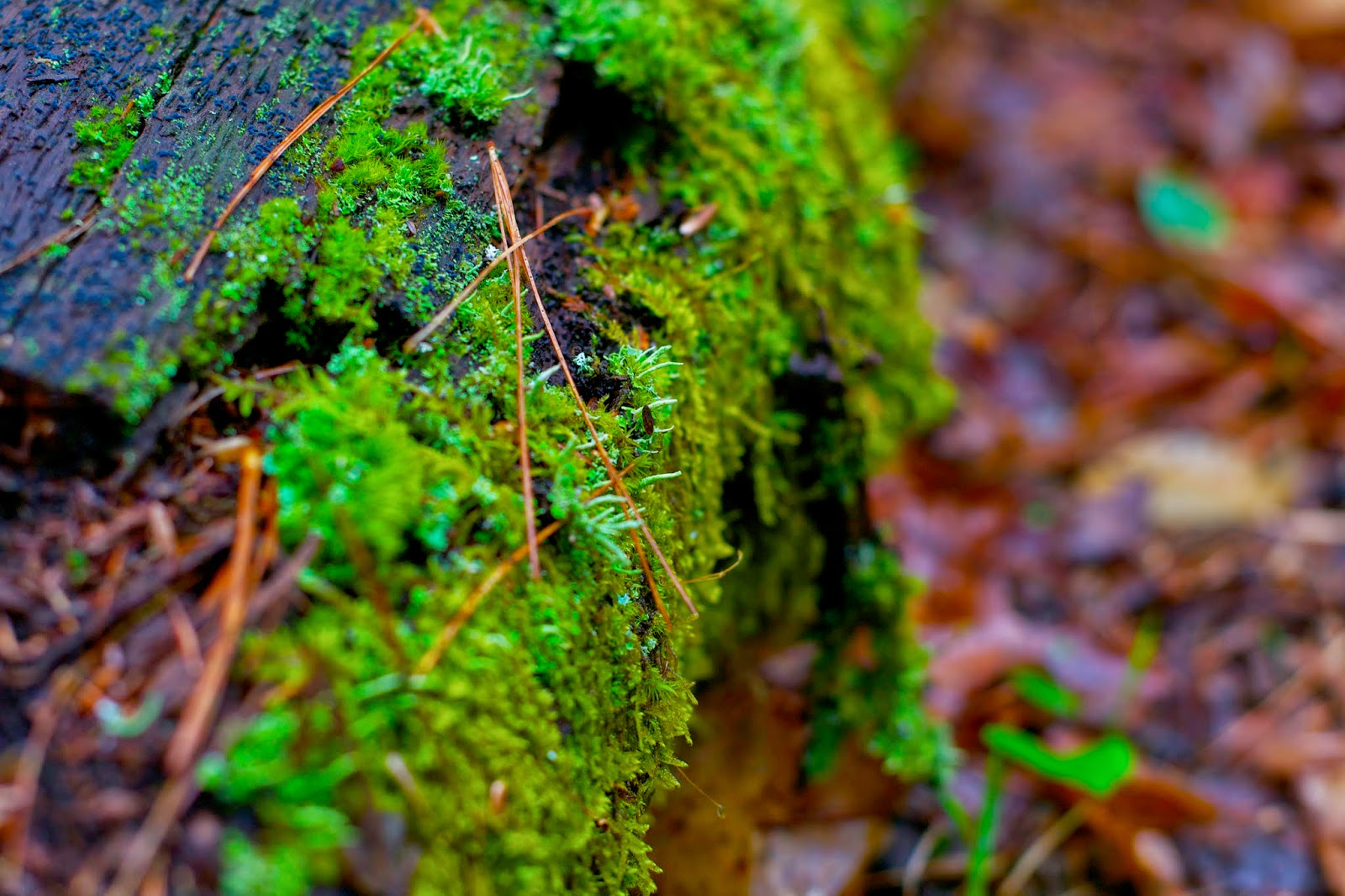 Moss and lichen taking over a fallen log.