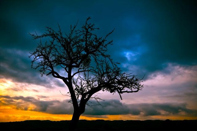 Instagram, profile podrózników, drzewo, niebo