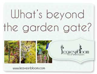 What 39 S Beyond The Garden Gate In August Leavesnbloom