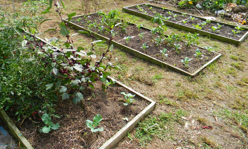 is it too late to plant a garden the survival gardener