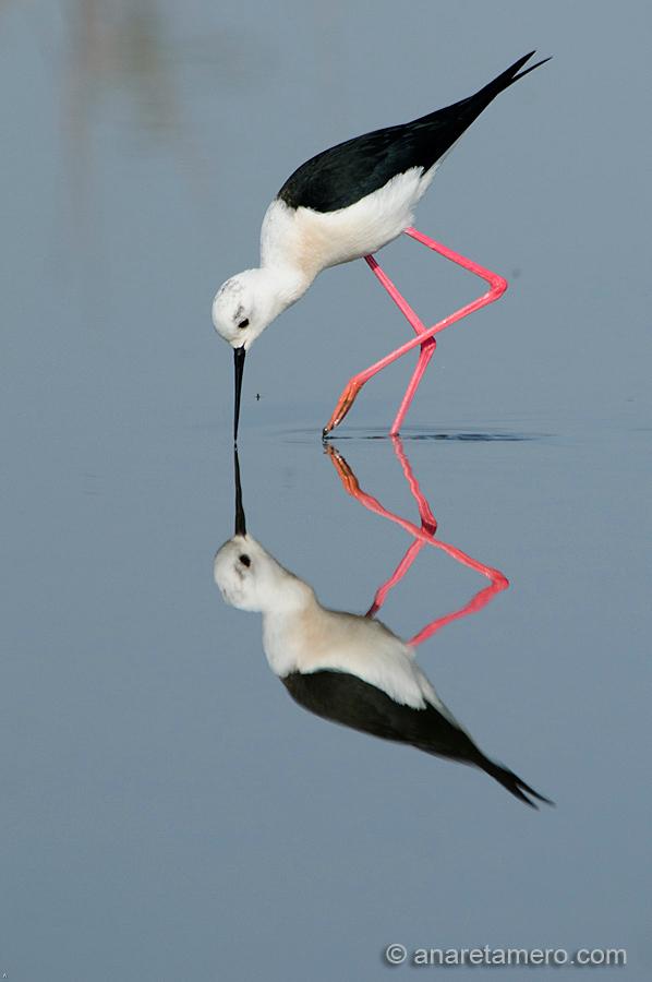 Más aves, al pinchar sobre la imagen