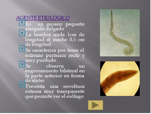 enterobiasis thesis