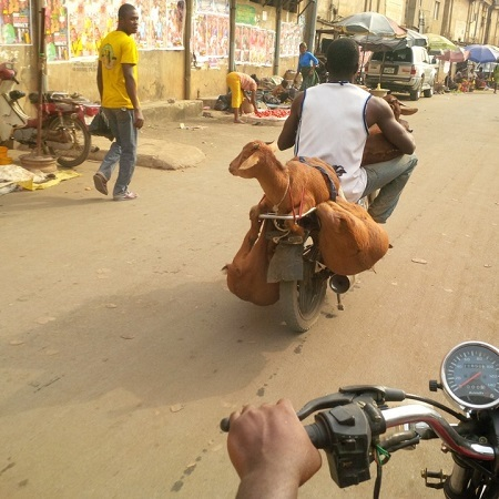 Omg! See How This Okada Man Carried 4 Goats on His Bike in Onitsha (Photos)