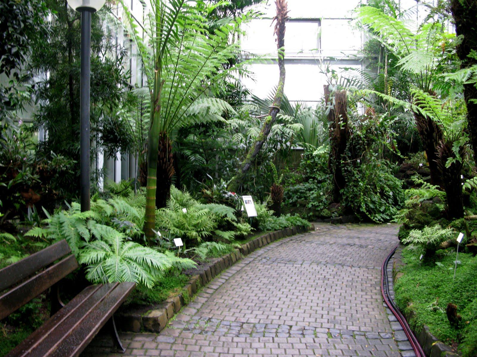 En tu jard n mayo 2011 Plantas tropicales interior