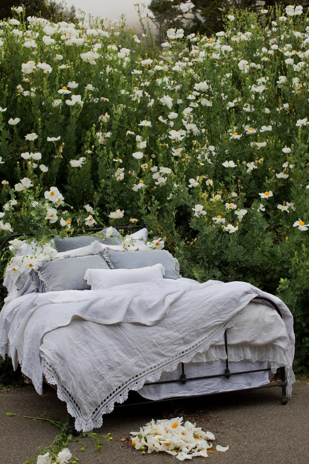 Bella blog bed of the month for In bed with hd buttercup